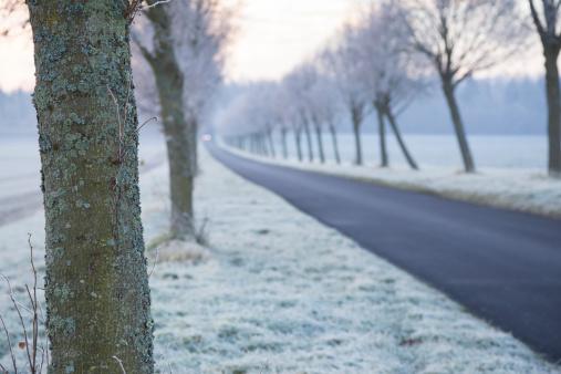 Avenue「Germany, Baden-Wuerttemberg, Tuebingen, Einsiedel, avenue in winter in the morning」:スマホ壁紙(4)