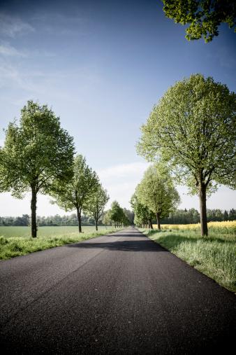 Avenue「Germany, Baden-Wuerttemberg, Einsiedel near Tuebingen, Avenue in spring」:スマホ壁紙(14)