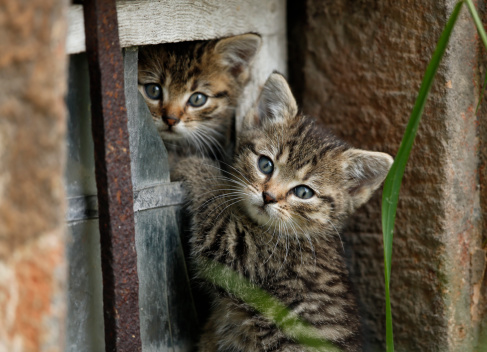 Kitten「Germany, Baden Wuerttemberg, Kittens playing in broken window」:スマホ壁紙(6)