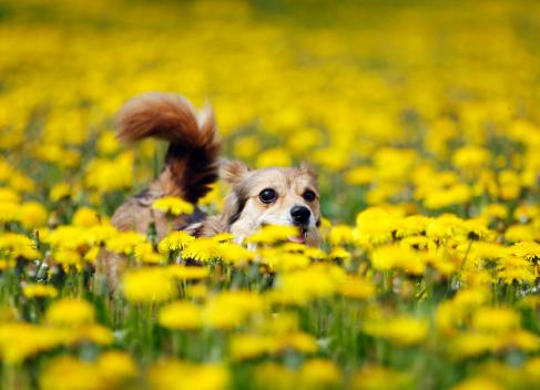 Wolf「Germany, Baden Wuerttemberg, Mixed breed dog running in meadow」:スマホ壁紙(17)