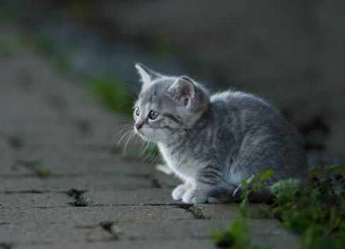 Kitten「Germany, Baden Wuerttemberg, Kitten sitting on street, close up」:スマホ壁紙(12)