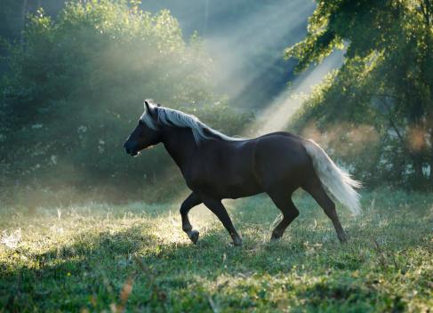 Horse「Germany, Baden Wuerttemberg, Black forest horse running on grass」:スマホ壁紙(13)