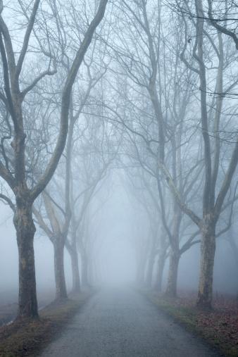 セイヨウカジカエデ「Germany, Baden-Wuerttemberg, Constance district, avenue of plane trees in fog」:スマホ壁紙(2)