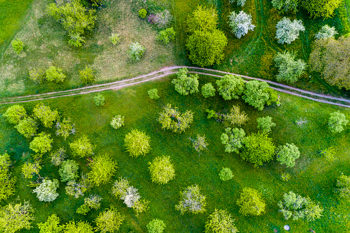 Deciduous tree「Germany, Baden-Wuerttemberg, Swabian Franconian forest, Rems-Murr-Kreis, Aerial view of meadow with scattered fruit trees and dirt road」:スマホ壁紙(6)
