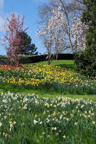 Germany, Baden-Wuerttemberg, Mainau, Blooming tulips and daffodils:スマホ壁紙(壁紙.com)
