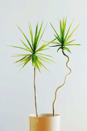 Individuality「Straight and Curvy Houseplants」:スマホ壁紙(1)