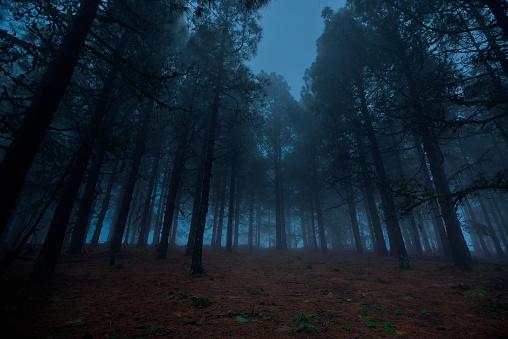 秋「夜の森」:スマホ壁紙(6)
