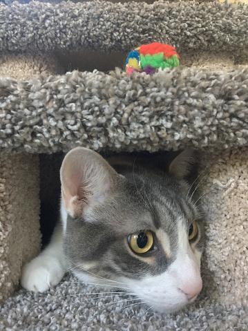 Scratching Post「Cat peeking out of his cat post」:スマホ壁紙(18)