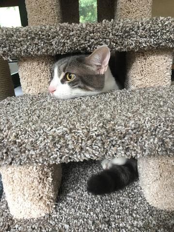 Scratching Post「Cat peeking out from cat post steps」:スマホ壁紙(16)