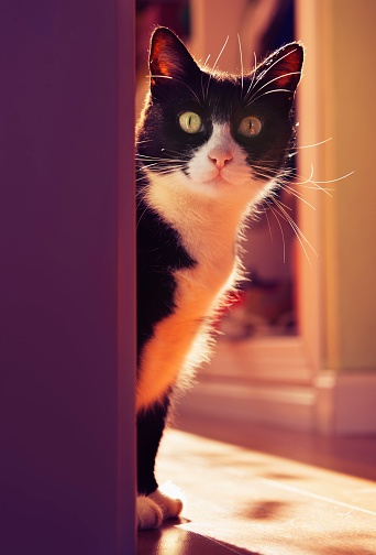 子猫「A cat peeking around a corner, benalamadena costa, malaga, costa del sol, andalusia, spain」:スマホ壁紙(12)