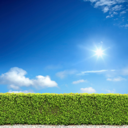 Bush「bush fence and sunny sky」:スマホ壁紙(16)