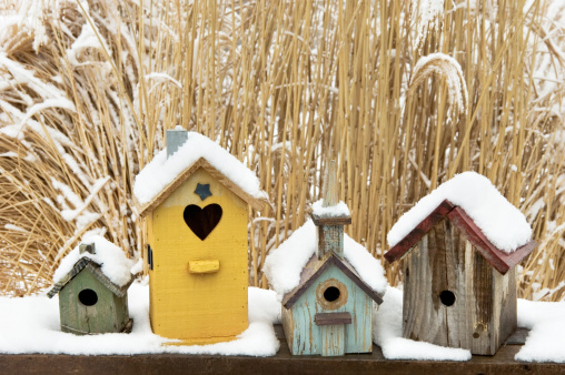Ornamental Garden「Birdhouses in Snow, Rustic, Weathered, and Colorful」:スマホ壁紙(10)