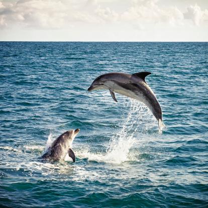 イルカ「ドルフィン Leap :」:スマホ壁紙(6)