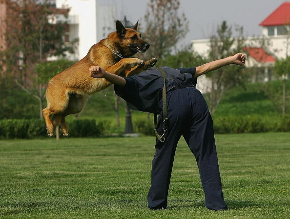 Jumping「Chinese Drug Sniffer Dog Training Base Open Day」:写真・画像(19)[壁紙.com]