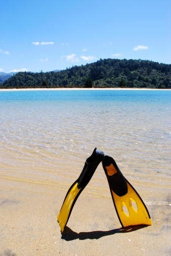 Abel kiwi「Resting Flippers, Abel Tasman」:スマホ壁紙(3)