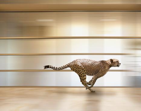 Digital Composite「A sprinting cheetah speeds through an office」:スマホ壁紙(4)