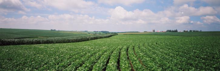 Iowa「Soybean Fields」:スマホ壁紙(13)
