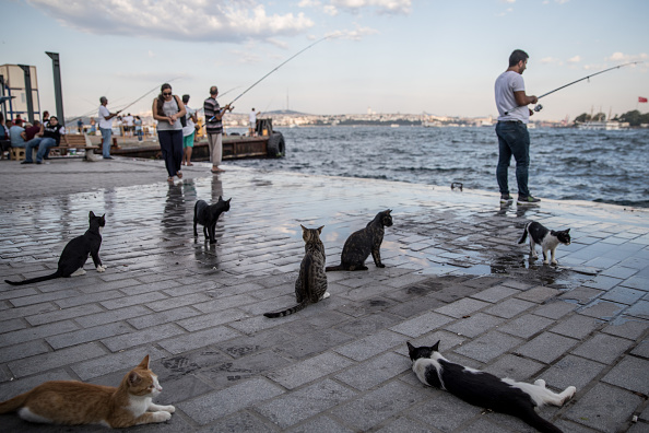 Small Office「The Cats Of Istanbul」:写真・画像(12)[壁紙.com]