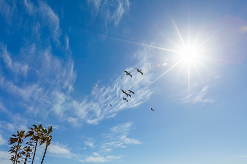 San Diego County「Pelicans flying under sunshine」:スマホ壁紙(11)