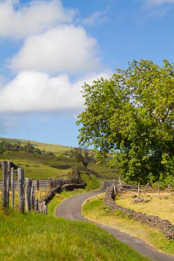 Oprah Winfrey「Thompson Road, a one lane road that winds through Ulupalakua in upcountry Maui; Keokea, Maui, Hawaii, United States of America」:スマホ壁紙(0)
