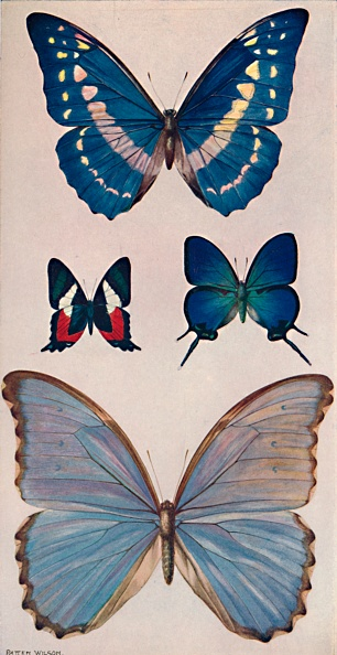 White Background「Some Of Rios Butterflies, 1914」:写真・画像(15)[壁紙.com]