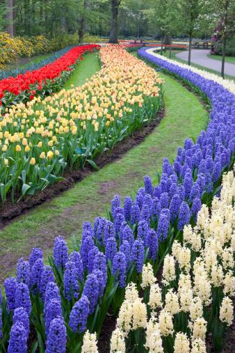 Keukenhof Gardens「Flower gardens of Keukenhof, Netherlands」:スマホ壁紙(15)