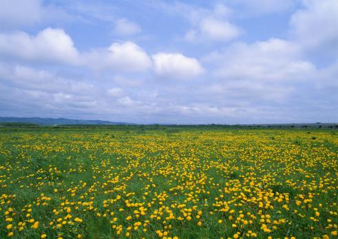 たんぽぽ「Flower Garden」:スマホ壁紙(14)