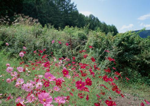 草地「Flower Garden」:スマホ壁紙(18)