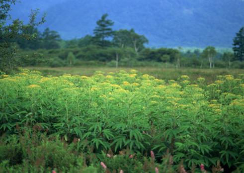 Nikko City「Flower Garden」:スマホ壁紙(10)