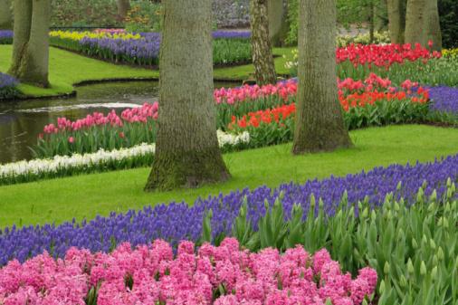 Keukenhof Gardens「Flower garden」:スマホ壁紙(7)