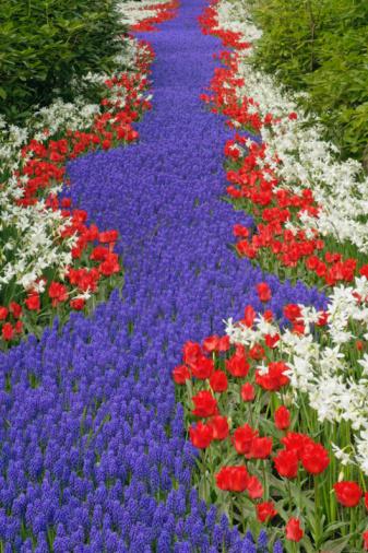 Keukenhof Gardens「Flower garden」:スマホ壁紙(17)