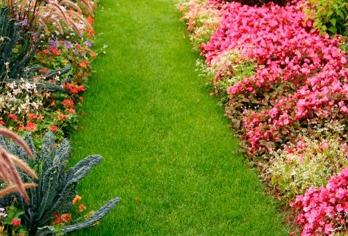 観賞用庭園「花のガーデン」:スマホ壁紙(11)