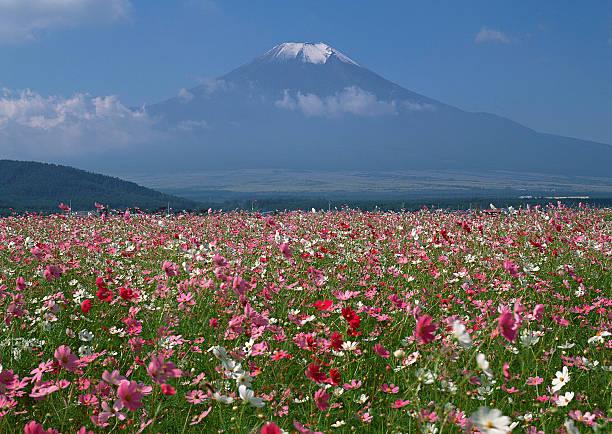 Flower Garden and Mt. Fuji:スマホ壁紙(壁紙.com)