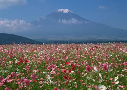 花「Flower Garden and Mt. Fuji」:スマホ壁紙(9)