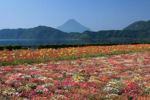 Satoyama - Scenery「Flower Garden, Ibusuki, Kagoshima, Japan」:スマホ壁紙(10)