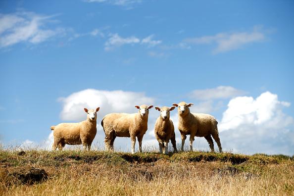 Horizontal「New Zealand Faces Potential Drought」:写真・画像(8)[壁紙.com]