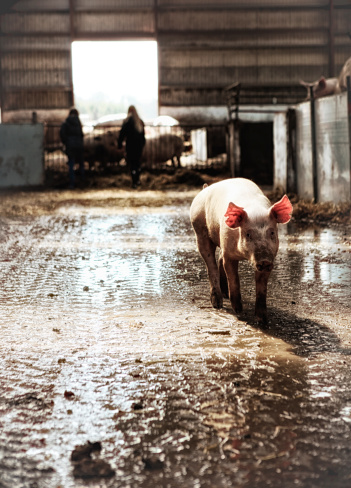 Danish Culture「Piglet on the run.」:スマホ壁紙(12)