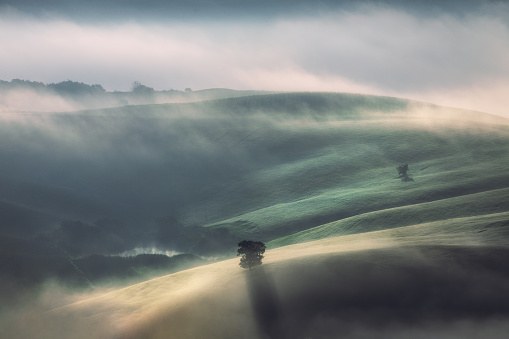 Frost「Fog and sunlight through misty trees in the valley of Tuscany, Italy」:スマホ壁紙(17)