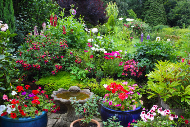 Brightly coloured summer flowers in patio pots & flowerbed.:スマホ壁紙(壁紙.com)