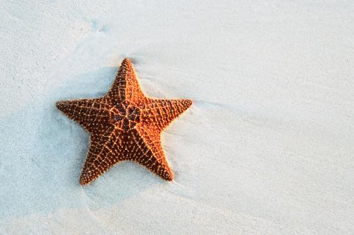 Starfish「Starfish at the beach」:スマホ壁紙(8)