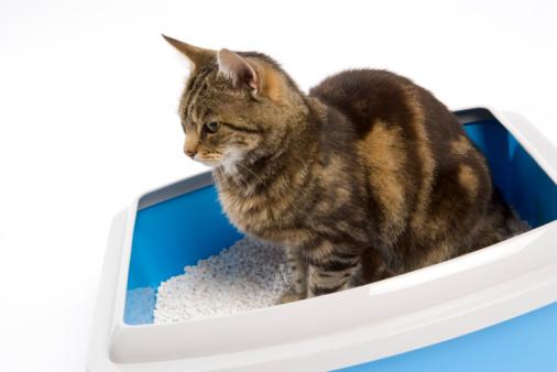 Litter Box「Cat in litter box」:スマホ壁紙(14)