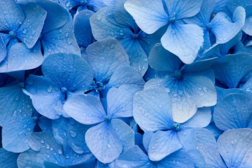 Abstract Backgrounds「Hydrangea」:スマホ壁紙(9)