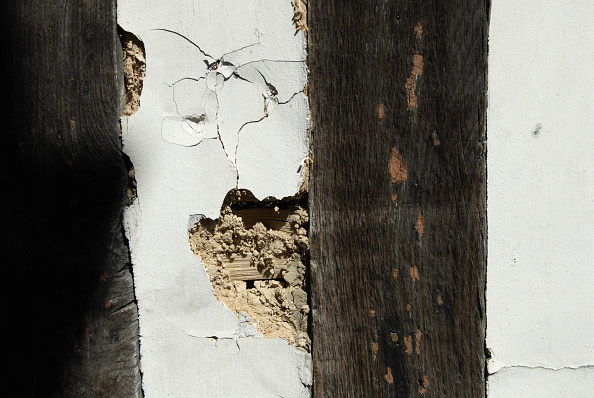 Textured「Lime plastering disrepair on an old timber-framed building, Ipswich, United Kingdom」:写真・画像(19)[壁紙.com]