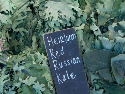 Cabbage「Heirloom red Russian kale at market」:スマホ壁紙(0)
