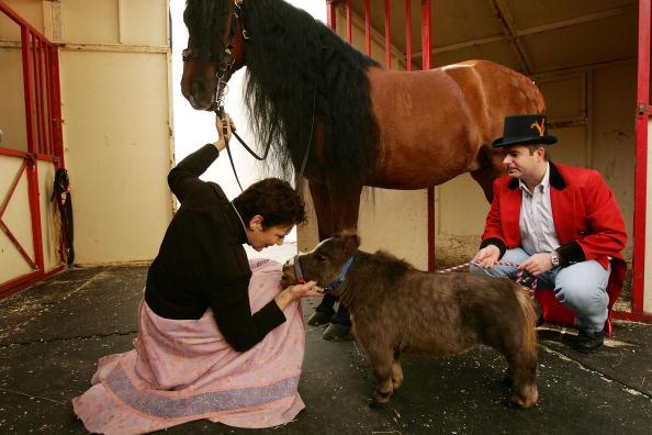 Horse「World's Smallest Horse Visits New York City」:写真・画像(14)[壁紙.com]