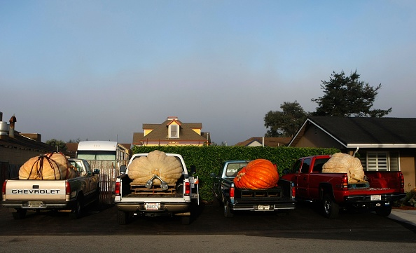Mode of Transport「California Growers Compete For Largest Pumpkin Honors」:写真・画像(15)[壁紙.com]
