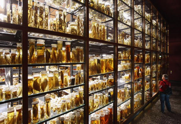 Crustacean「Natural History Museum Celebrates 200th Anniversary」:写真・画像(15)[壁紙.com]