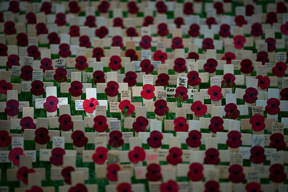 Poppy - Plant「The Fields Of Remembrance At The National Memorial Arboretum」:写真・画像(8)[壁紙.com]