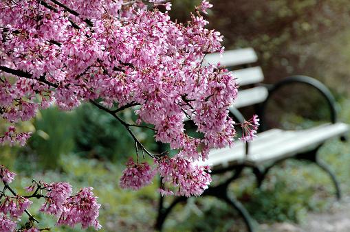 花壇「美しい公園のベンチ」:スマホ壁紙(5)