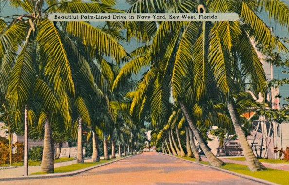 Postcard「Beautiful Palm-Lined Drive In Navy Yard」:写真・画像(13)[壁紙.com]